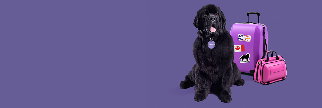 Johnson, the large and lovable Newfoundland dog, sits smiling in front of a packed suitcase.